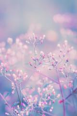 Fantasy flower, nature vintage pastels background