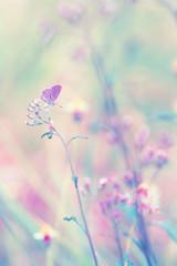 Fantasy butterfly on flower, nature vintage pastels background
