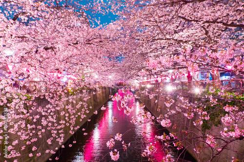 Foto op Plexiglas Tokio Cherry Blossoms along the Meguro River, Tokyo Japan