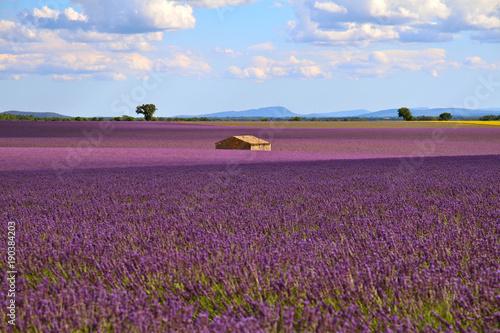 Foto op Canvas Lavendel Au milieu des lavandes