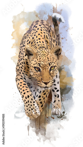 Fototapeta Leopard watercolor painting