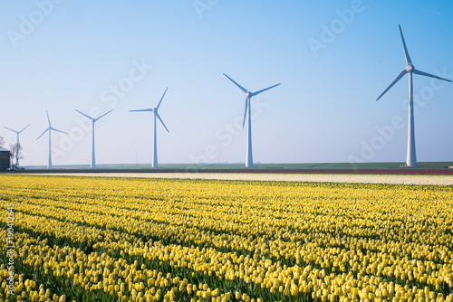 Fotobehang Tulpen The tulip fields on a beautiful sunny Holland Netherlands day.