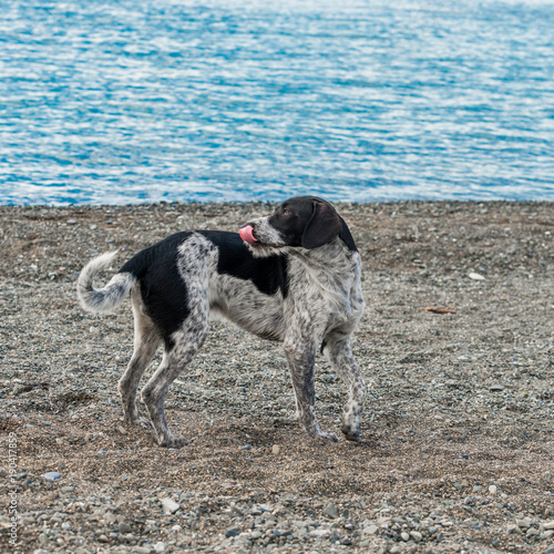 adorable  dog on a beach. Poster