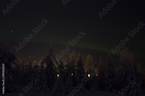 Fotobehang Noorderlicht View of a snowy forest in Scandinavia, while the Northern Lights start in the sky. The trees are covered with snow and the sky is clear and starry.