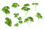 Leaves of Parsley Isolated on White Background - 190427636