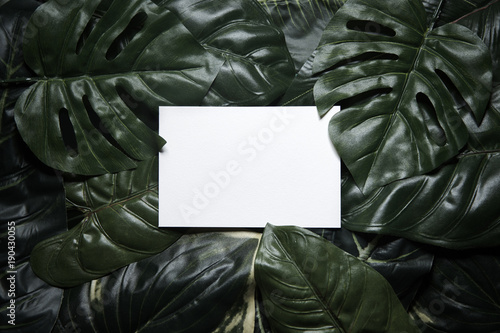 Tropical green leaves composition