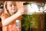 Mädchen füttert Garnelen im Aquarium - 190436217