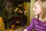 Mädchen beobachtet Goldfische im Aquarium - 190436246