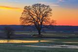 Sonnenuntergang im Wendland 3/ Sonnenuntergang über der Elbtalaue bei Dannenberg im Landkreis Lüchow-Dannenberg (Niedersachen, Deutschland). - 190447009