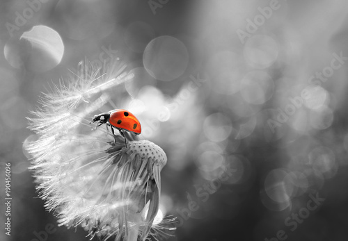 Small Red Ladybug on the background of gray without colors