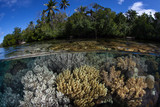 Healthy Corals and Mangrove in the Solomon Islands