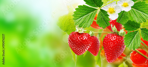 fresh strawberries - 190476237
