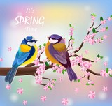 Vector birds couple on a Blossom cherry flowers branch. Spring background illustrations