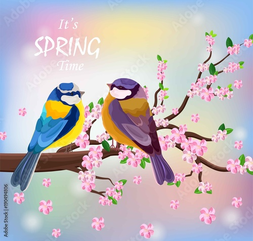 Fototapeta Vector birds couple on a Blossom cherry flowers branch. Spring background illustrations