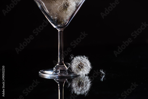 Dark photo with white fluffy dandelions on black. Graceful leg of a glass and fluff.