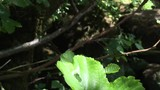Libelle - 190504664