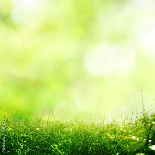 Natury łąka z wiosny tłem