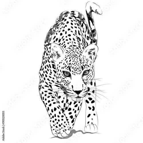 Fototapeta Leopard monochrome illustration