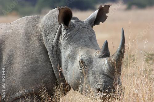 Aluminium Neushoorn Majestic Rhino