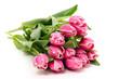 Zweifarbige Tulpen - 190545279