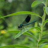 Dragonfly sitting on leaf - 190569438
