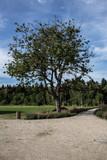 Kirschbaum im Park - 190569619