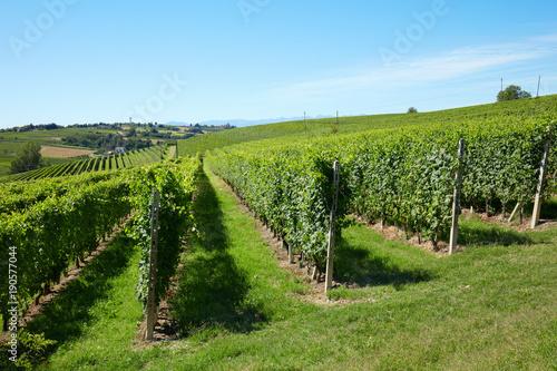Aluminium Wijngaard Vineyards in a sunny day, blue sky