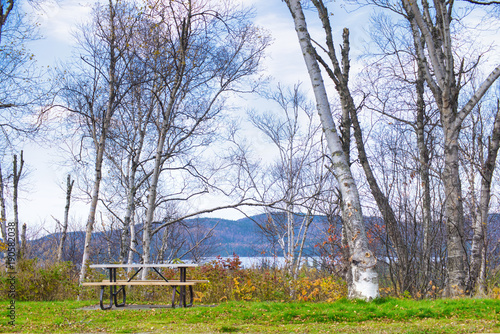 Birch trees overlooking Northern Ontario from the town of Wawa during the fall