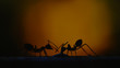 Silhouette ants drinking water with sunrise, low key screen process and grunge painting texture for animal nature background