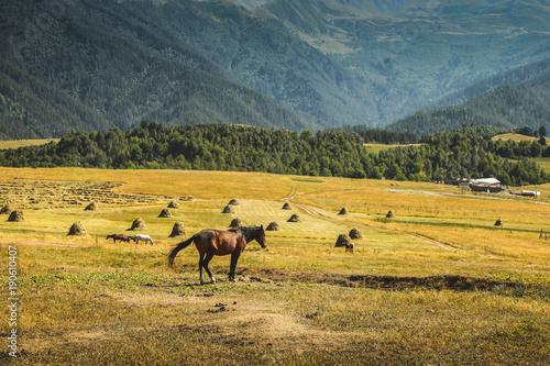 Papiers peints Miel Horses in mountain under the blue sky