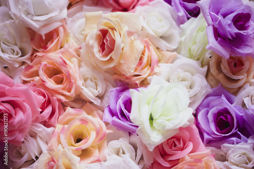Roses wall background