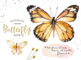 Set of watercolor boho butterfly. Vintage summer isolated spring art. Watercolour illustration. design wedding card, insect, flower beauty banner. Bohemian decoration. - 190638287