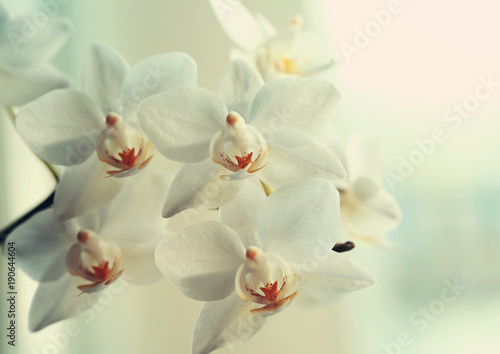 Orchid beautiful flower close up macro © Voinakh
