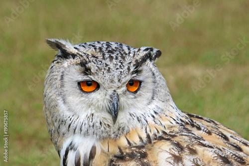 Aluminium Eagle Eagle Owl