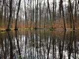 Buchenwald spiegelt sich in einem Tümpel - 190690266