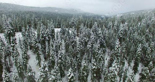Fotobehang Bleke violet tree, branch, christmas, snow, winter,