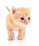 Kitten on white background. - 190699259