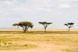 Serengeti National Park, Tanzanian national park in the Serengeti ecosystem in the Mara and Simiyu regions - 190703289