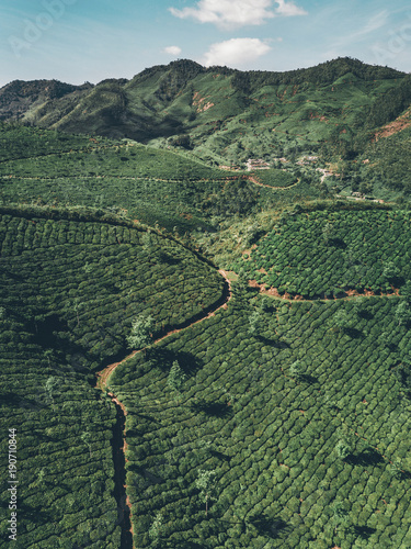 Fotobehang Khaki Teeplantage