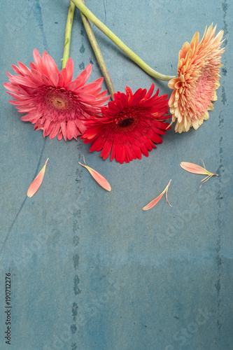 Fotobehang Gerbera Lovely gerbera daisy flowers on turquoise shabby chic background