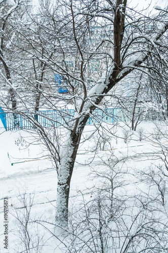 Poster Moskou Winter in Moscow. Snow covered trees in the city. The view from the window after a heavy snowfall.