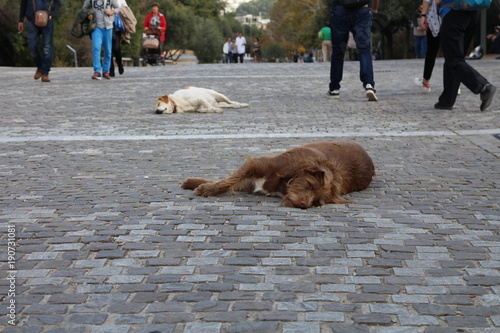 Sleeping dogs on street of Plaka, Athens, Greece