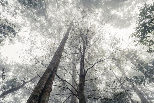 Jungle in the Mist