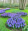 Colorfu flower in spring garden. Kekenhof - Netherlands