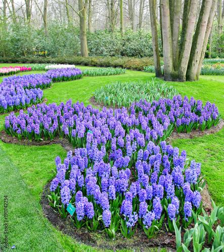 Sticker Colorfu flower in spring garden. Kekenhof - Netherlands