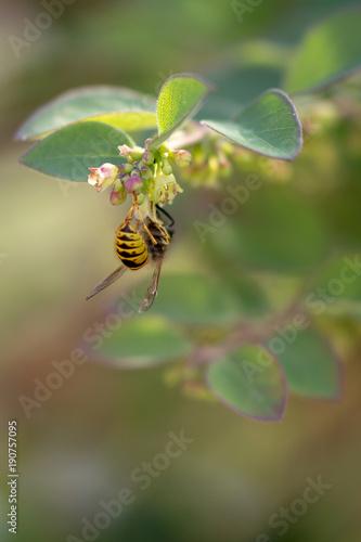 Fotobehang Bee Bee