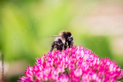 Aluminium Bee Wasp