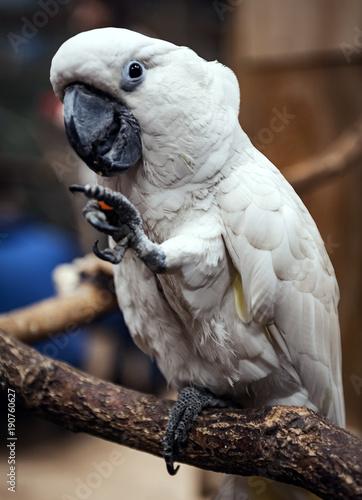 Papuga, zdjęcie wykonane w papugarni