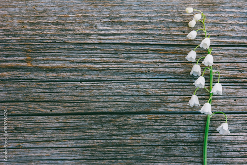 Fotobehang Lelietjes van dalen single flower fragrant Lily of the valley on grey wooden retro background in the cracks with copy space