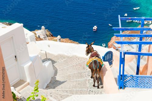Foto op Canvas Santorini Donkey on stairs, Santorini island, Greece